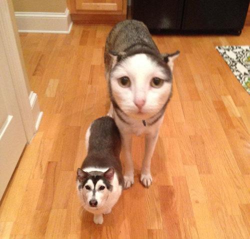 兄弟みたいな犬と猫02