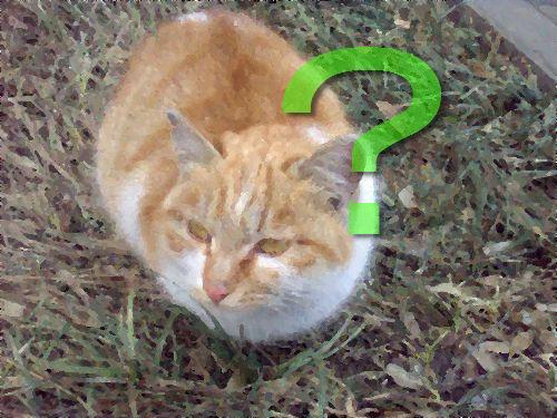 迷子の猫だと思ったら00