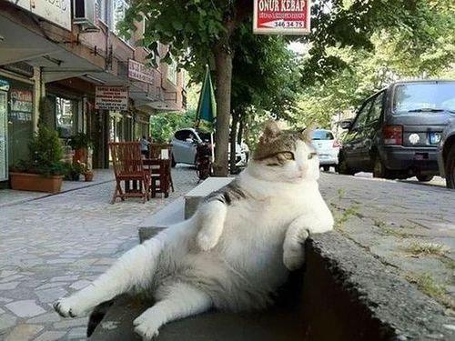クールな猫の銅像が建つ00