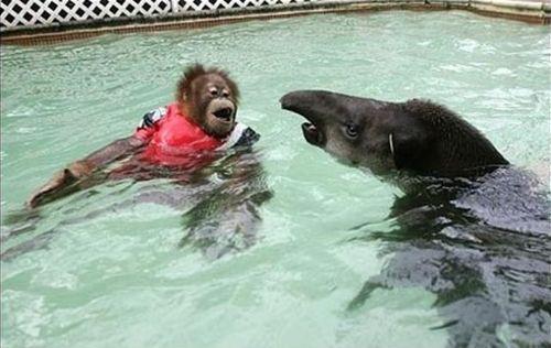 プールに動物14