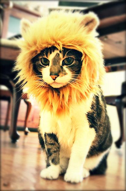 前世は別の動物だったであろう猫16