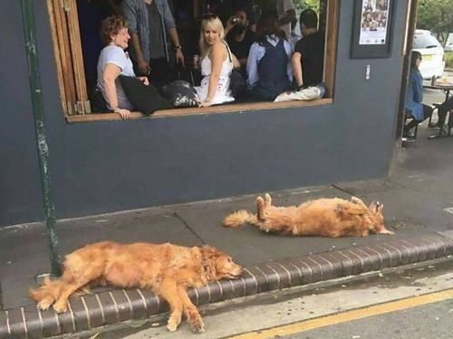飼い主を待つ犬たち12