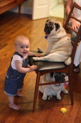 パグと赤ちゃん04