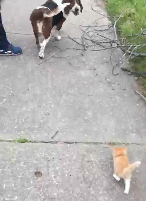 犬の散歩をしていたら迷子の子猫がついてきた02