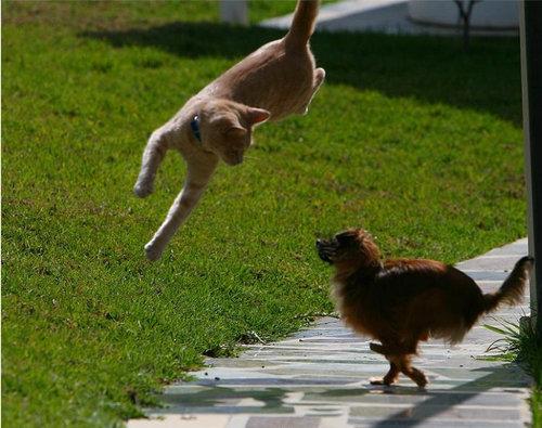 10跳ぶ・飛ぶ動物たち
