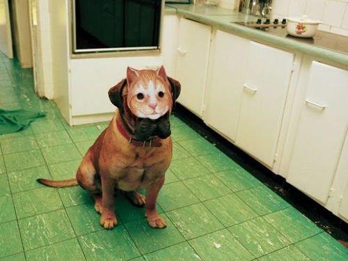 猫好きを犬好きにする写真23