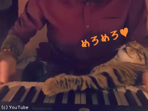飼い主さんの演奏にメロメロな猫00