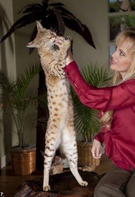 世界一背の高い猫01