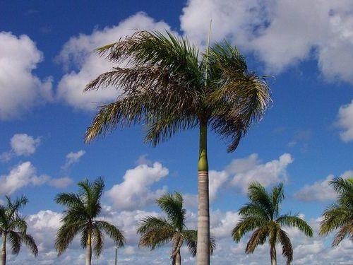 フロリダのホームレス00