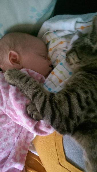 妊娠中に拾った猫が、今は赤ちゃんと親友に03