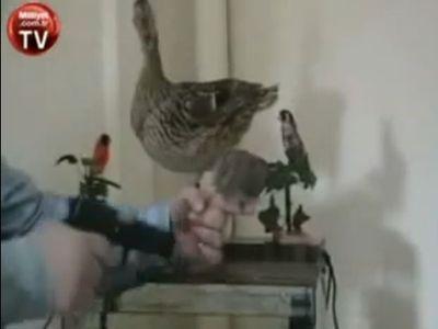 小鳥に向かって「手を上げろ」