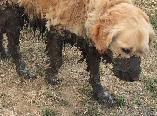 うちの犬は水に飛び込むと思った02