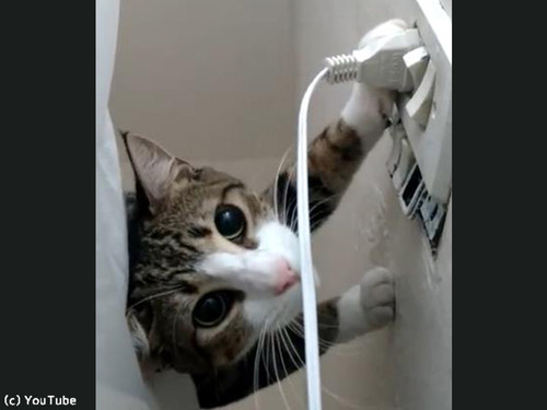 プラグを挿したい飼い主VSプラグを抜きたい猫00