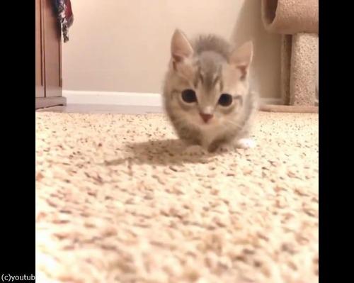 カメラにおそるおそる近づく子猫04