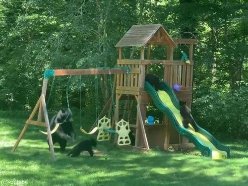 庭の遊具でクマの親子たちが楽しそうに遊んでた02