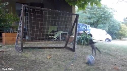 世界最高のゴールキーパー猫03