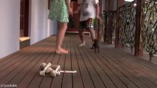 レディを守る小さな子犬03
