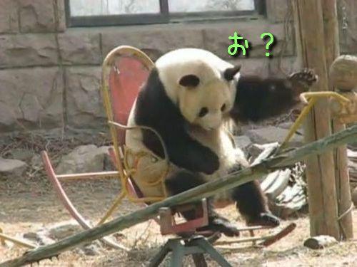 ロッキングチェアにすわるパンダ