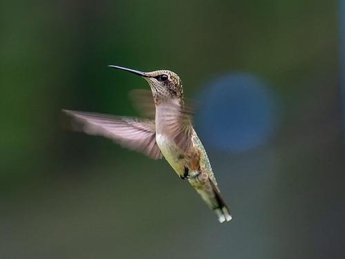 ハチドリの巣00