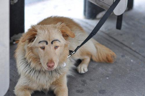 眉毛犬12