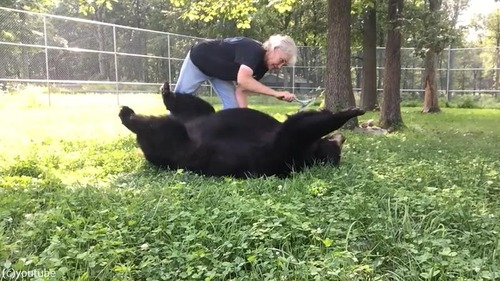 ブラッシング大好きな熊さん04