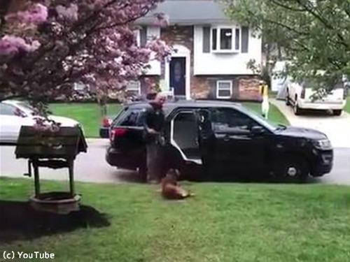 警察犬「働きたくないでござる」02