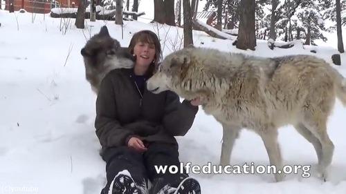 懐きまくりのオオカミが可愛過ぎる03