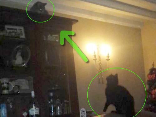 跳びあがる猫、迎え撃つ猫00
