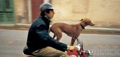自転車やバイクに乗る犬たち08