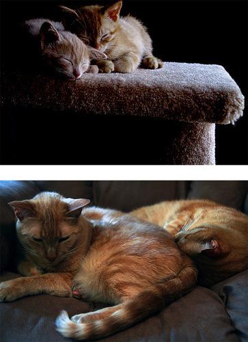 成長した猫08
