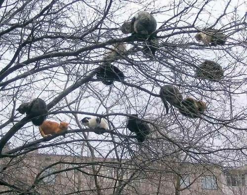 鳥のように木に止まる猫たち07