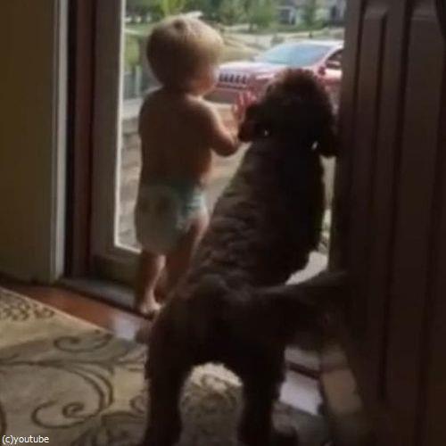 赤ちゃん&犬「パパが帰ってきた!」01