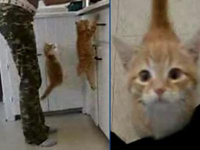 超まっしぐら!強烈な「おなかすいた攻撃」をする子猫二匹