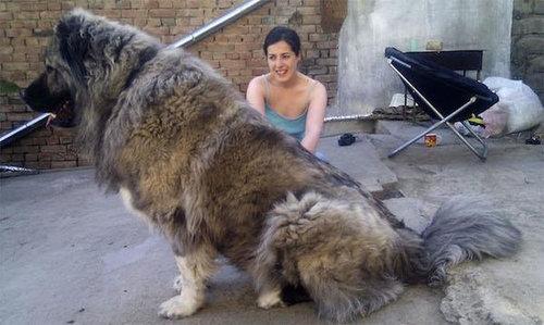 犬を巨大化する写真テクニック15