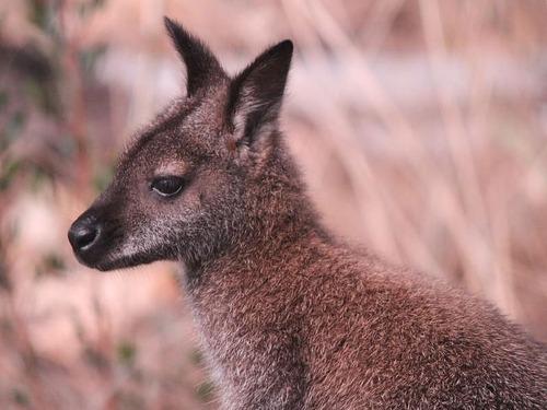 オーストラリア森林火災で動物たちの食料供給00