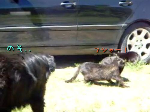 ケンカする猫2匹、仲裁する犬3匹