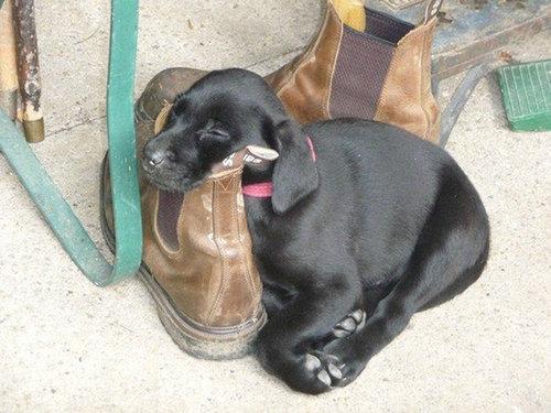 子犬はどこでも寝れる08
