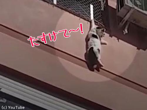 ビル4階で動けなくなった猫を救出00