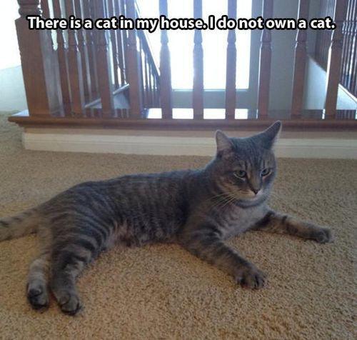 帰宅したら…見知らぬ猫がいる02