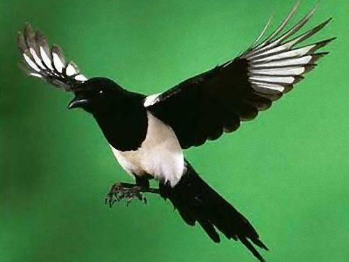 鳥に盗まれた高級時計00