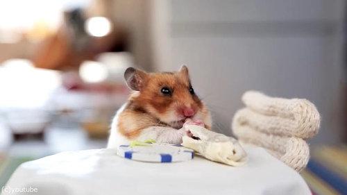 ハムスターにブリトーを食べさせたい09
