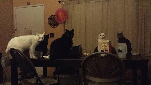密談する猫たち03
