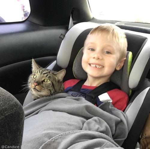4歳児と2匹の猫が再会04
