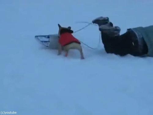 犬「これは僕のだ!」そりを奪う05