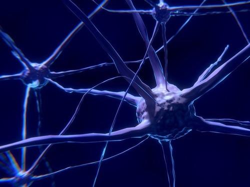 人の神経系