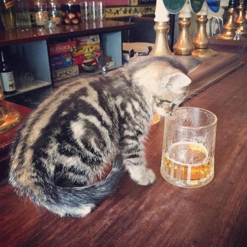 イギリスの猫パブ06