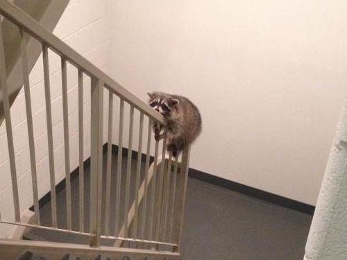 階段で目が離せない02