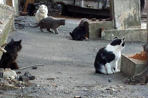 誰ひとり寄せ付けなかった野良猫01