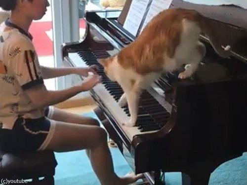 ピアノを邪魔する猫
