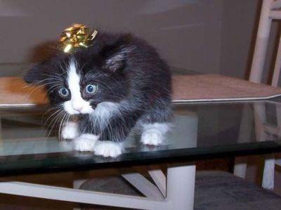 ハッピバースデーな猫01